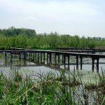 Wetland Monitoring