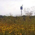 natural habitat restoration