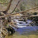 mountain stream monitoring