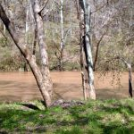 Green River Water Quality Network